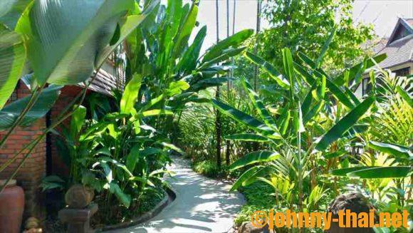ヤーンカムビレッジ(Yaang Come Village)館内の緑